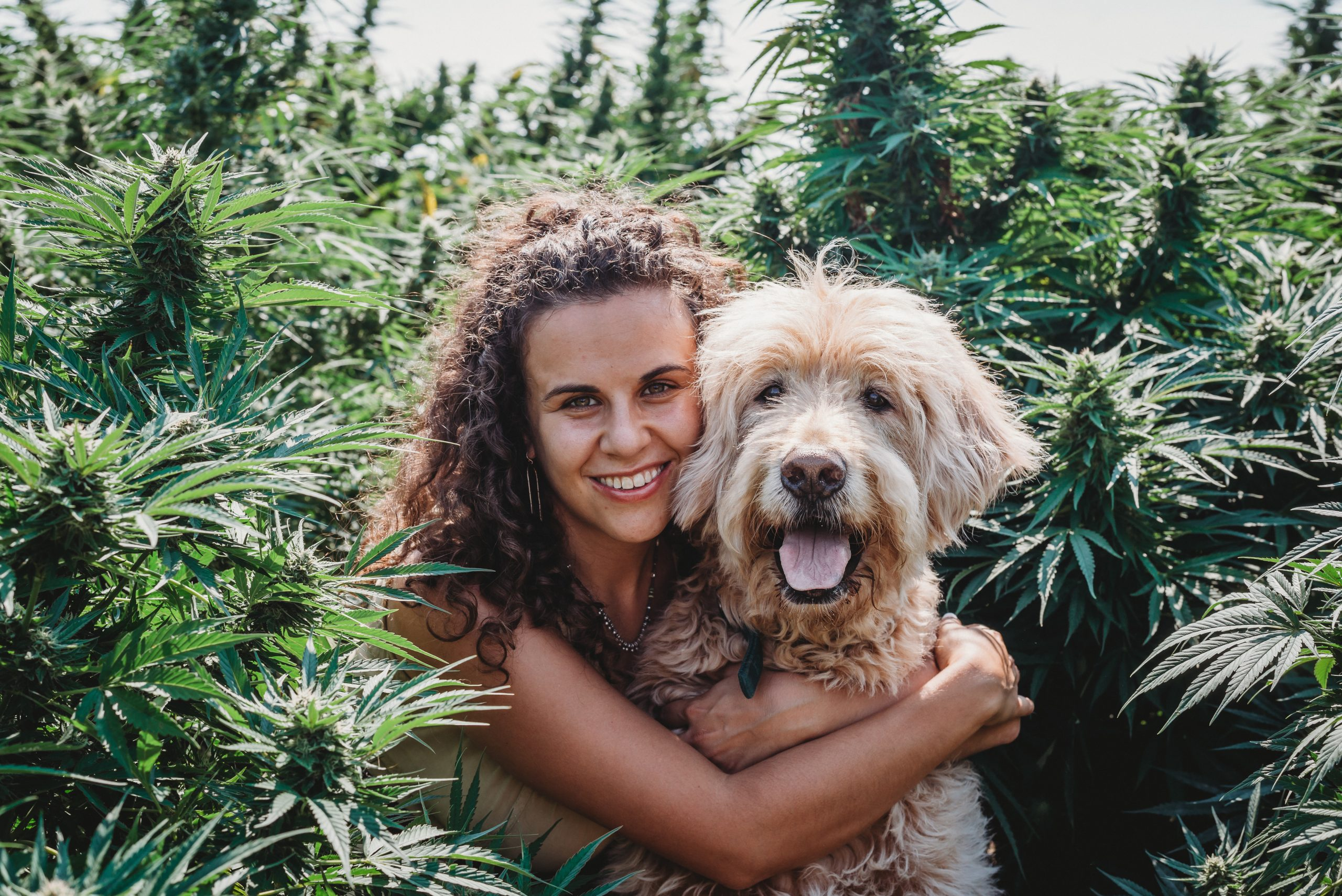 MGU 249 Karli Miller-Hornick  Using Cannabinoids